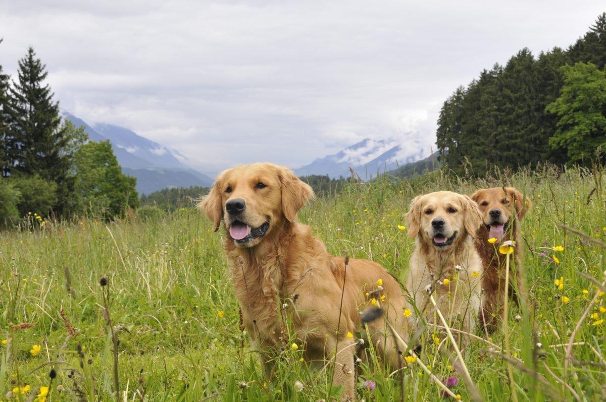 drei-hunde-vom-verein-vita-assistenzhunde-www.ciaogianna.de