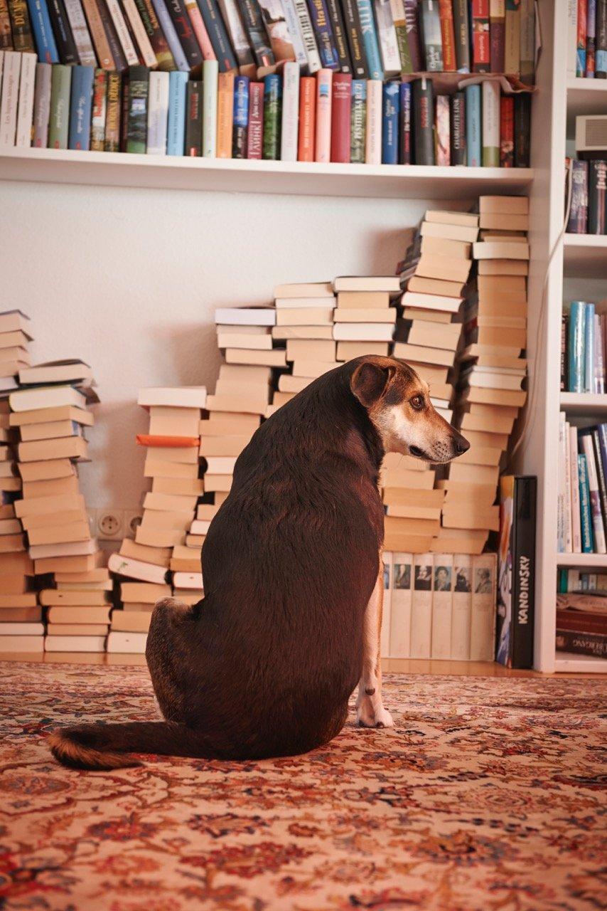 charlotte-link-und-ihre-huendin-amy-fuer-prominent-mit-hund-foto-nikolaj-georgiew-fuer-www.ciaogianna.de