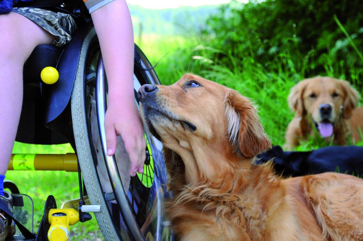 levin-und-hund-ashley-vom-verein-vita-assistenzhunde-foto: tatjana-kreidler-www.ciaogianna.de