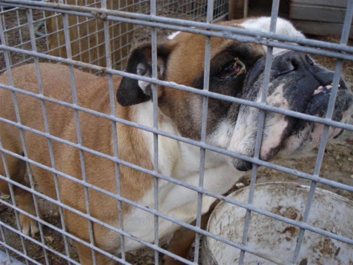 tierschutzverein-das-leid-der-vermehrerhunde-fuer-tiere-in-not-foto-dldv-www.misterspencer.de