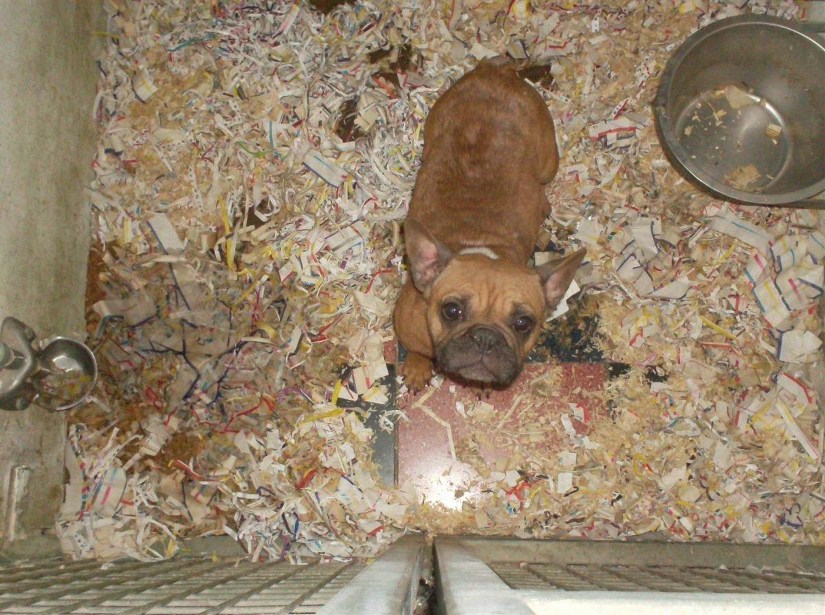 tierschutzvereint-das-leid-der-vermehrerhunde-fuer-tiere-in-not-foto-dldv-www.ciaogianna.de
