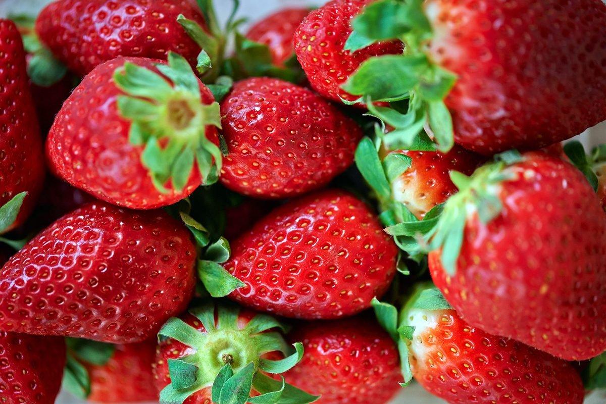 Erdbeeren-in-der-hundefuetterung-foto-maike-helbig-fuer-bettina-bergwelt-www.ciaogianna.de