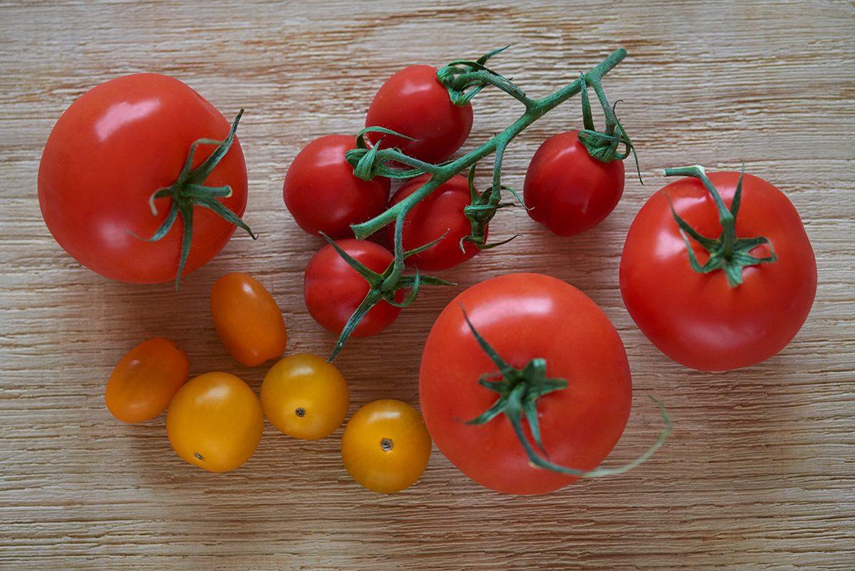 tomaten-sind-giftig-fuer-hunde-bloss-nicht-fuettern-foto-maike-helbig-fuer-www.ciaogianna.de