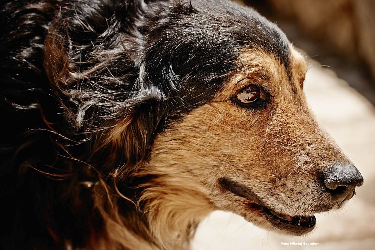 peter-maffay-mit-seinen-hunden-fuer-prominent-mit-hund-foto-nikolaj-georgiew-fuer-www.ciaogianna.de