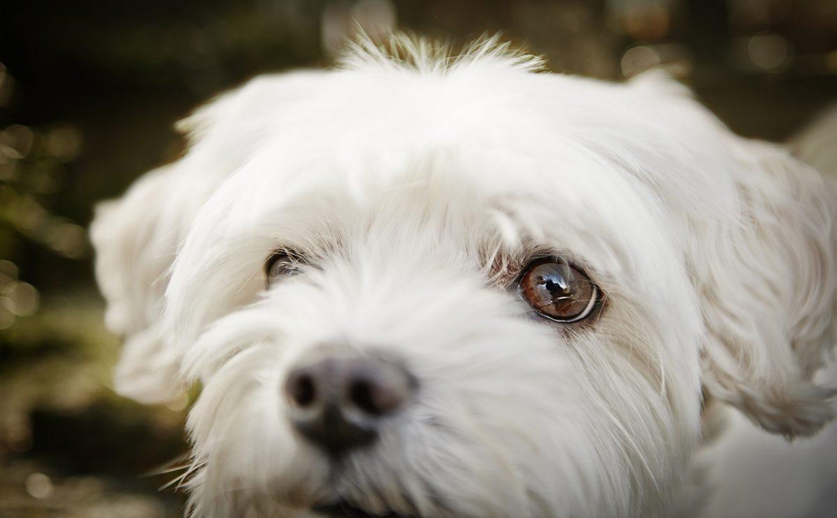 henry-maske-und-huendin-bonny-für-charity-buch-prominent-mit-hund-foto-nikolaj-georgiew-www.misterspencer.de