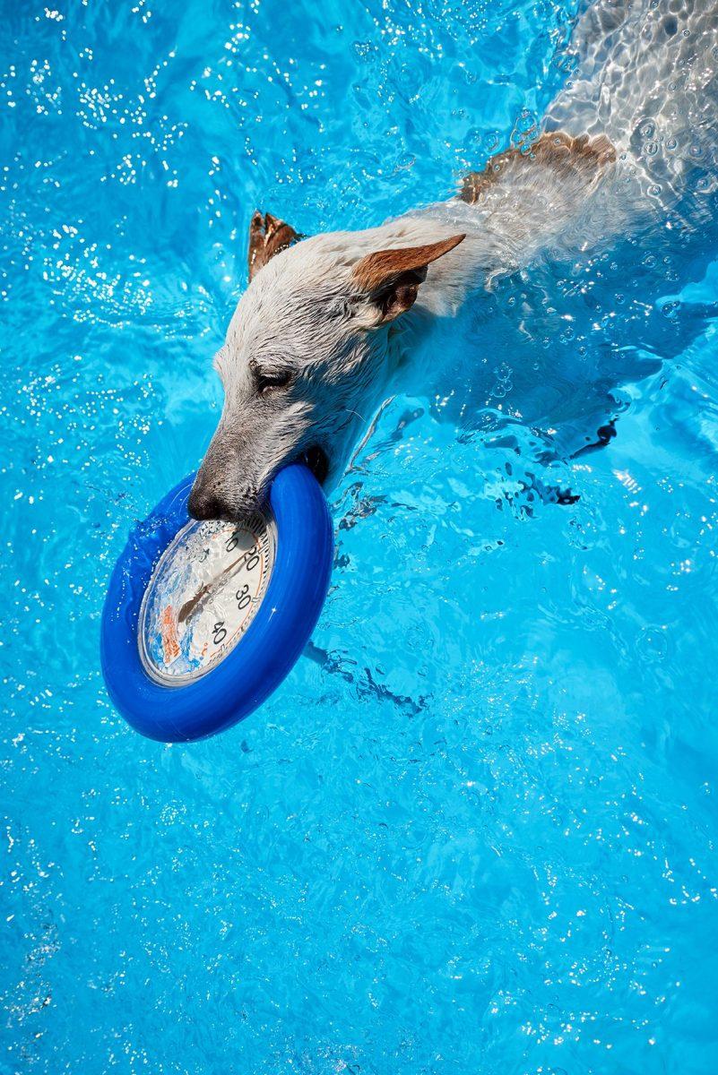 Wie kommen Hunde mit der Hitze klar?